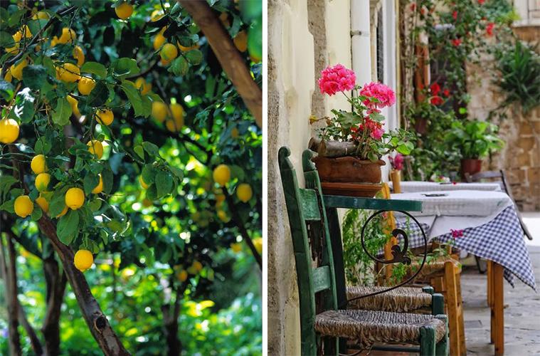 giardino mediterraneo 1