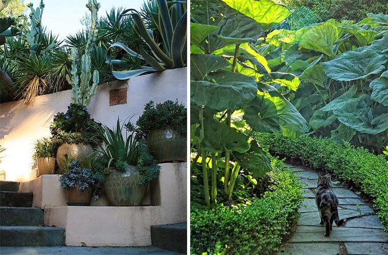 Progettare un giardino mediterraneo be01 pineglen - Giardino mediterraneo ...