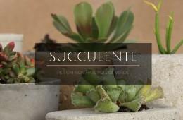 succulente (1)