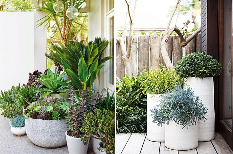 succulente (3)