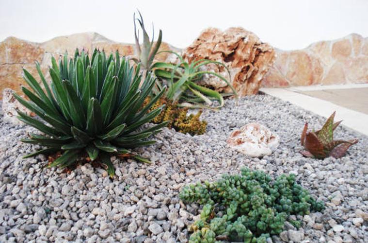 Giardino_succulente (1)