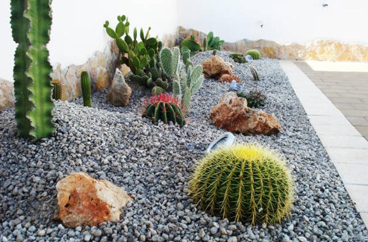 Giardino_succulente (8)