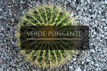 Giardino_succulente