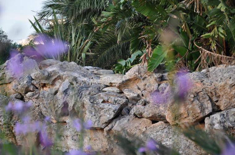 giardino (3)